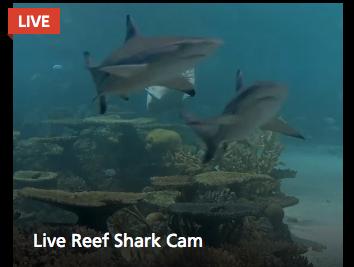 shark week live cameras